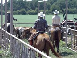 Tom Davis Horsemanship